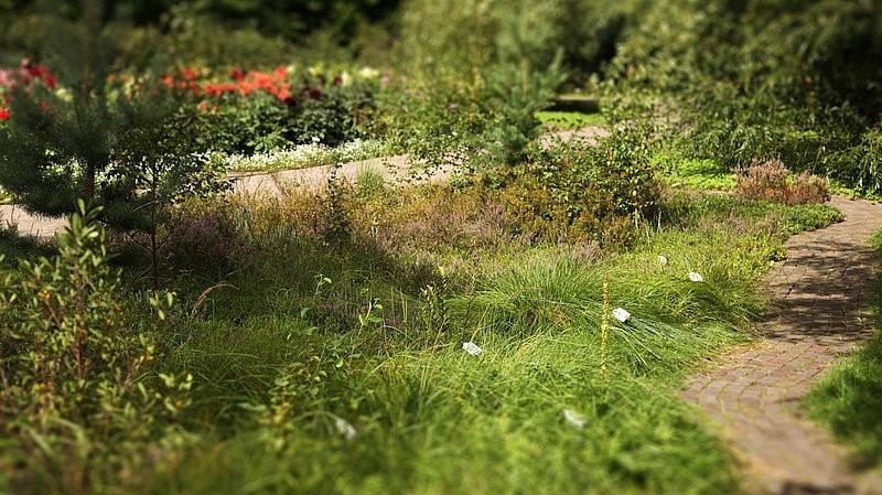"""24.09. 7.b kl. apmeklēja Latvijas Universitātes botāniskā dārza nodarbību """"Pļavas augi"""""""